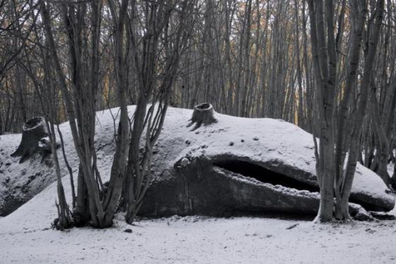 whale in forest winter